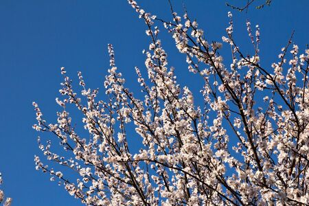 Beautiful flowers on a fruit-tree Stock Photo - 13859803