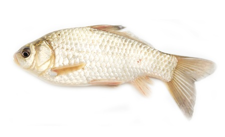 crucian carp on white background  photo
