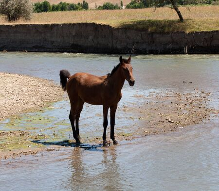 horse in the river on the nature photo