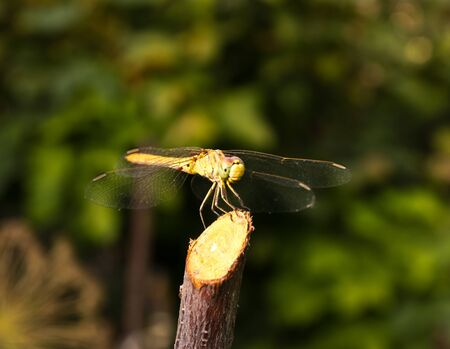 Dragonfly on the nature, macro Stock Photo - 13834024