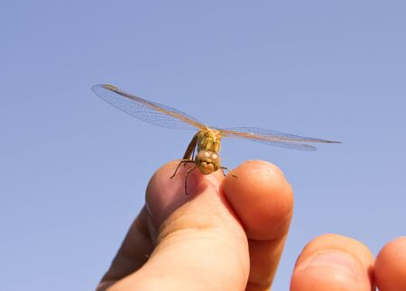 Dragonfly , macro photo