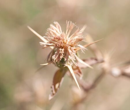 dry grass on the nature Stock Photo - 14060620