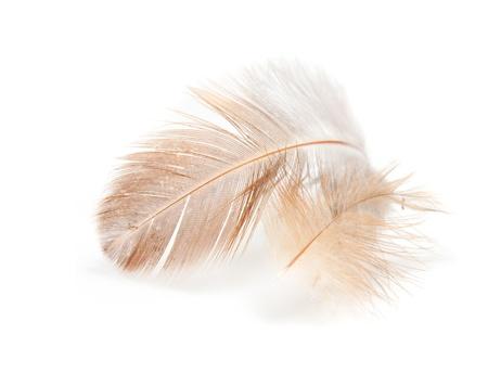 pluma blanca: las plumas de un pájaro sobre un fondo blanco Foto de archivo
