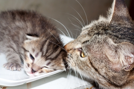little kitty cat with mum photo