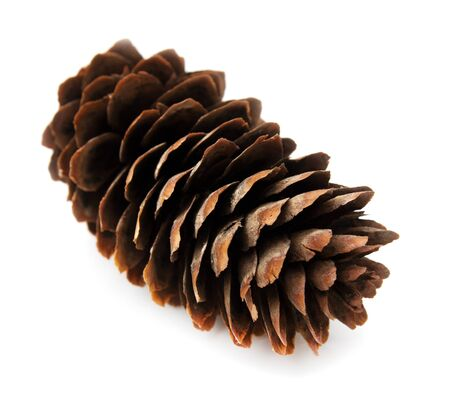 spruce pine cone on white background photo