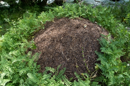 nest of ants in nature photo