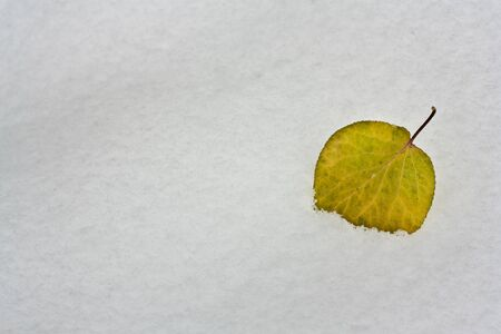 leaves in the snow on the nature photo
