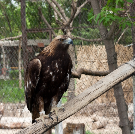 an eagle at the zoo photo