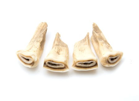 Horse teeth on a white background photo
