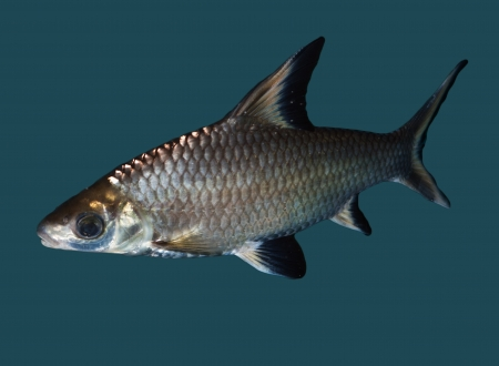 fish Stock Photo - 14570615