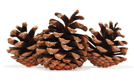 pine branch: pine cones on a white background