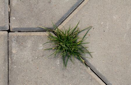 grass growing on a stone wall photo