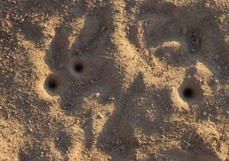 suelo arenoso: hormiga agujero en el suelo