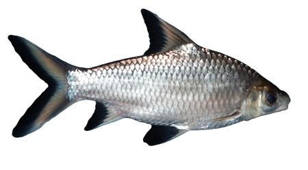 fische: Fisch Lizenzfreie Bilder