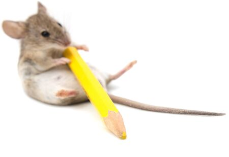 yellow tail: mouse with a yellow pencil on a white background Stock Photo