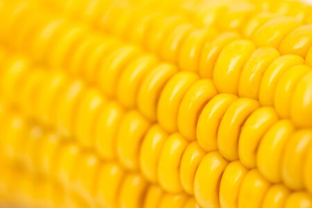 corn as background. macro photo