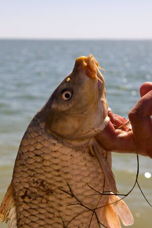 fish caught in the hand Stock Photo - 15726575
