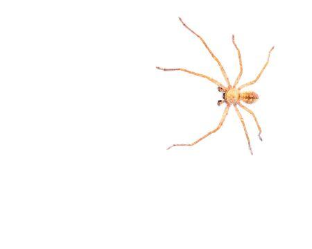 arachnidae: spider on a white background. macro Stock Photo