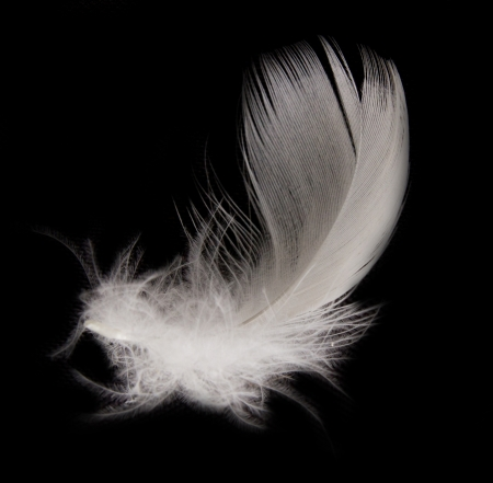 feather on the black background  Stock Photo