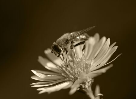 bee on a flower in nature. macro photo