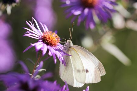 beautiful butterfly in nature photo