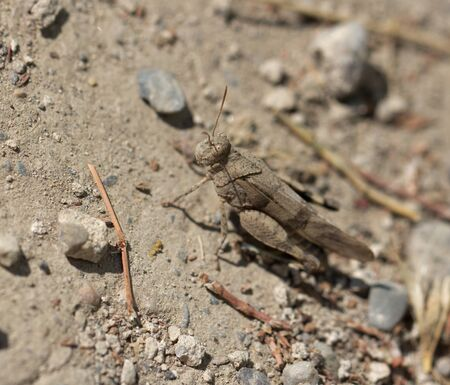 grasshopper in nature photo