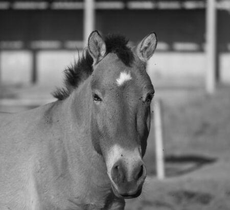 contemporaneous: Ritratto di un cavallo