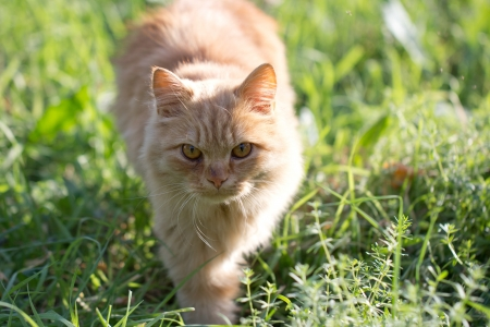 ginger cat in nature Stock Photo - 16280488