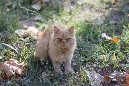 ginger cat in nature photo