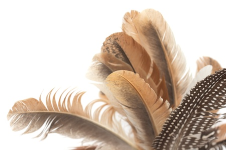 feathers isolated on white background photo