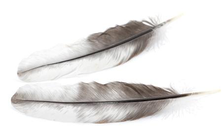 白い背景の上の羽。マクロ