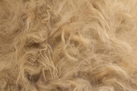 Animal fur texture background photo
