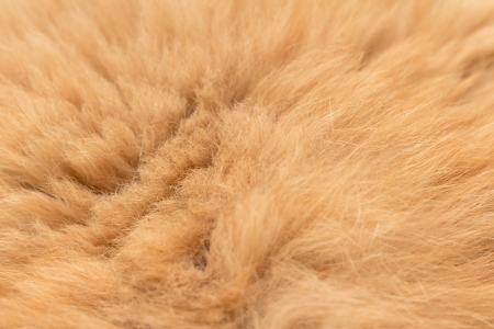 Animal fur texture background Stock Photo - 17637714