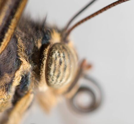 Portrait of a butterfly, macro Stock Photo - 18240613