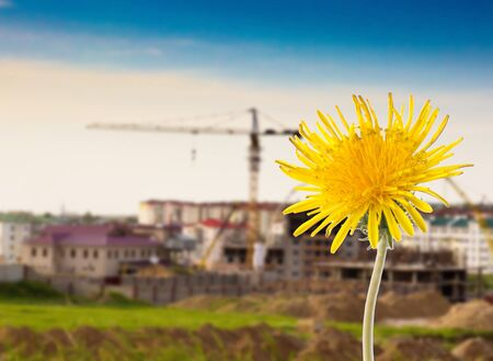 yellow dandelion on a background of the city photo
