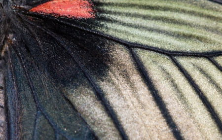 magnified: macro photo of morpho butterfly wing bottom side Stock Photo