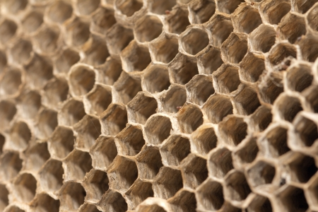 cluster house: beautiful honeycomb , background