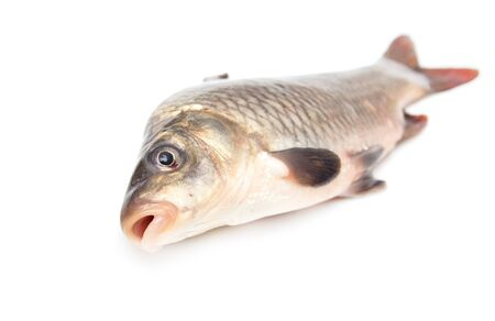 fish on a white background photo
