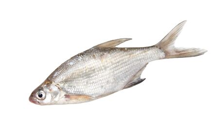 fish on a white background Stock Photo - 18892560