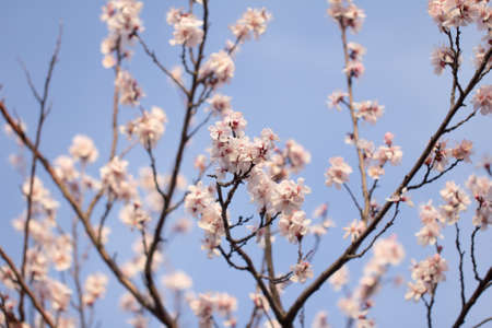 flower on a tree in spring photo