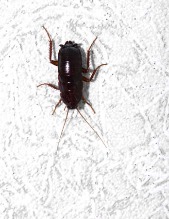 black beetle on the wall. macro photo