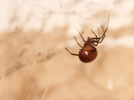 狩りのクモ。マルコ 写真素材