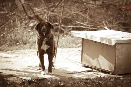 hydrophobia: arrabbiato nero cane bianco Archivio Fotografico