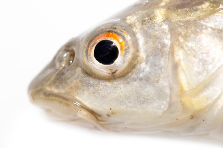 fish head on a white background. macro Stock Photo - 19396149