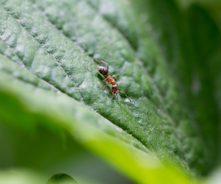 formic: little ant in nature. macro Stock Photo