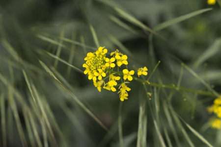 beautiful yellow flower in nature. macro Stock Photo