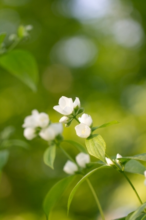 White flowers on the tree in nature photo