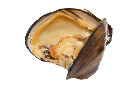 oyster shell as a background photo