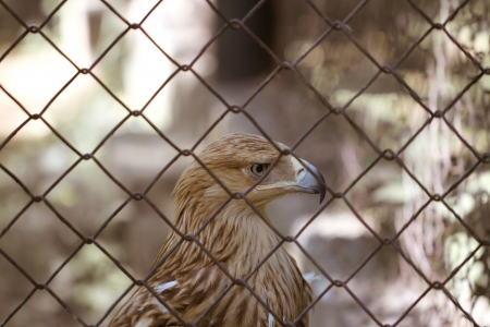 eagle behind bars photo