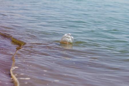 excremental: PET bottle in water